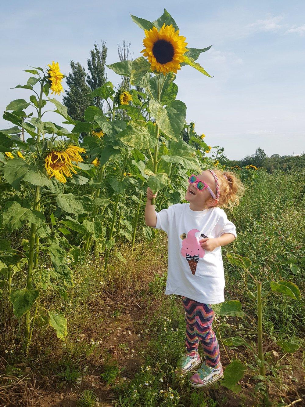 Enjoying choosing her own sunflowers