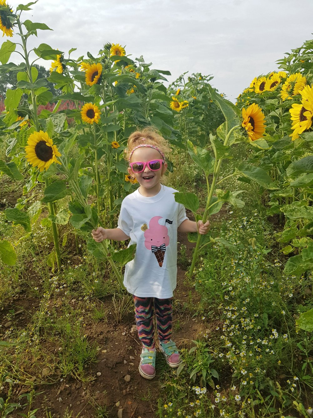 Pick your own sunflowers in Leicestershire!