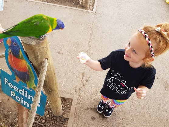 Feeding the rainbow lorikeets