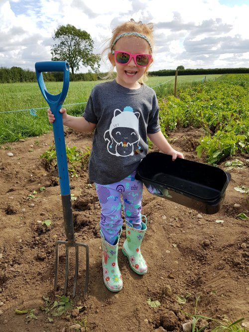 Spudfest! Pick your own potatoes at weekends for free throughout September