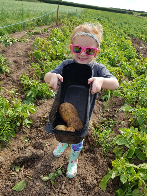 Each child can pick two potatoes