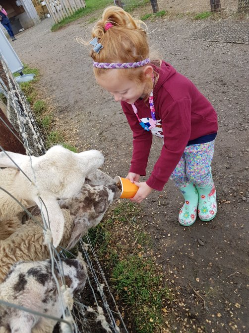 Feeding the animals at the farm