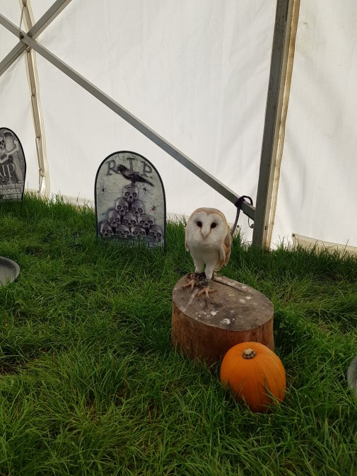 The owls were all lined up inside the marquee