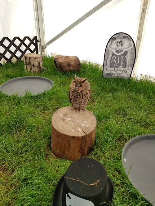 The owls were all so beautiful