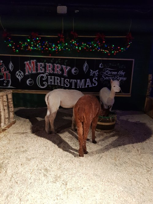 Santa's animals were really lovely to visit