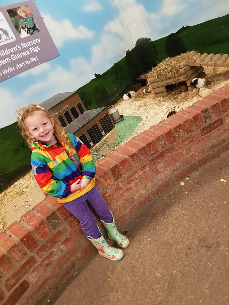 Visiting the guinea pigs at Hatton Adventure World