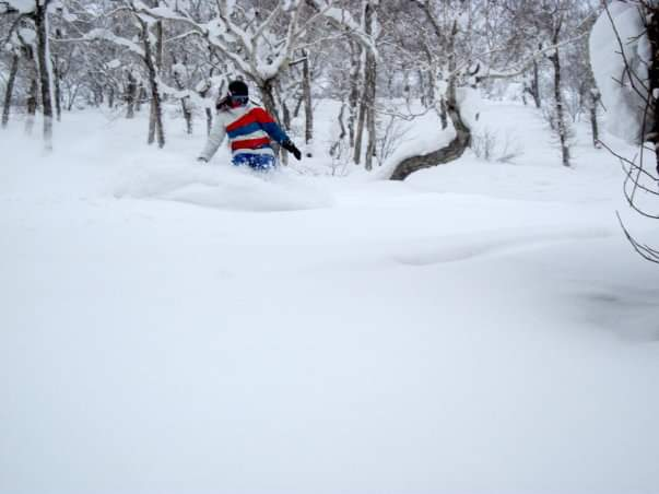 Hokkaido: The most incredible snow I've ever sleighed!