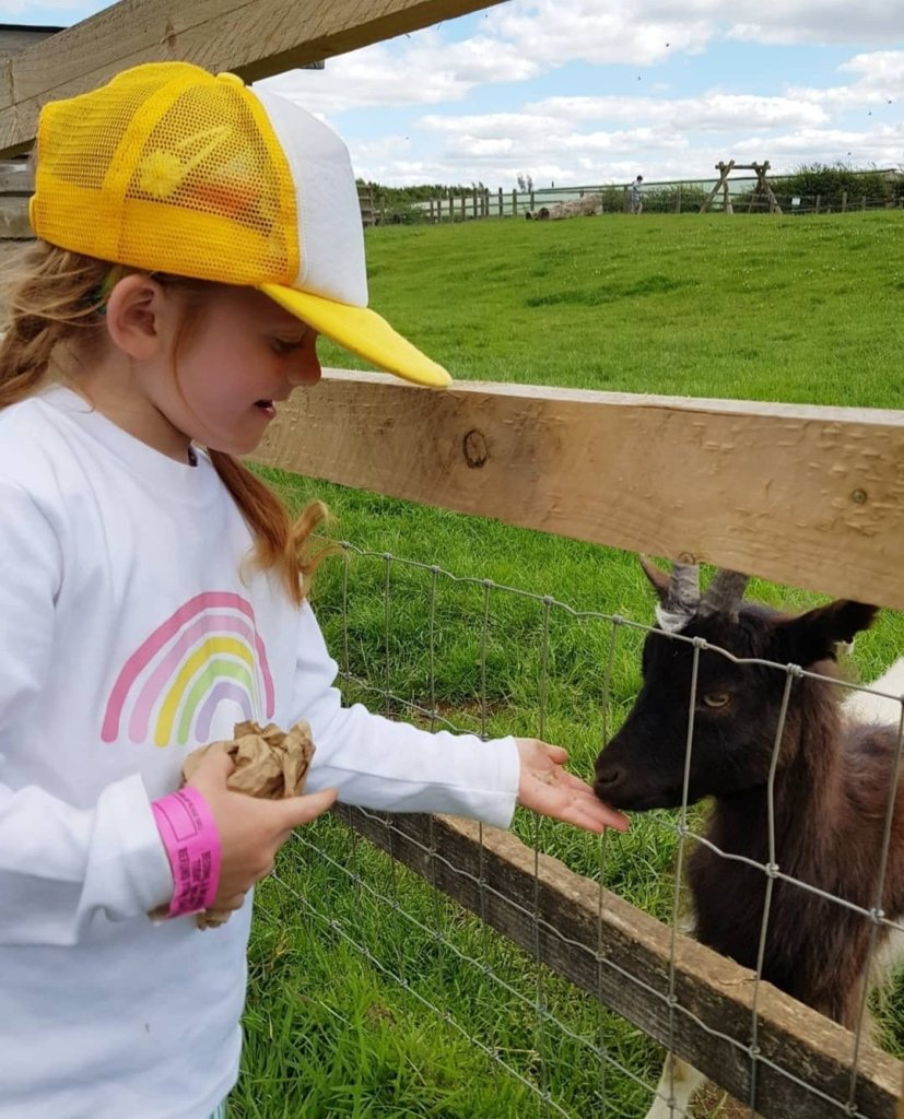 Feeding the animals at Cotswold Farm Park