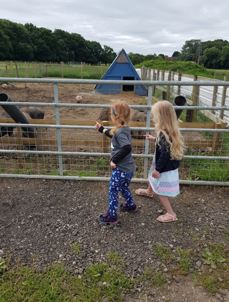The girls were mesmerised by the huge pigs