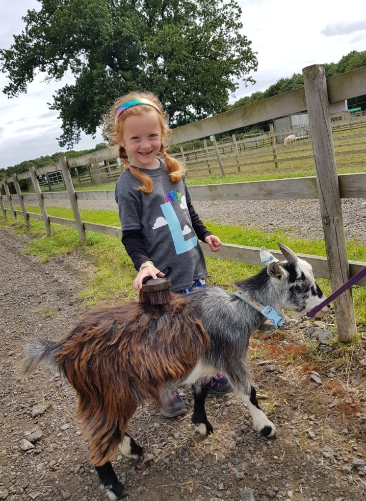Goat grooming at Bluebell Dairy