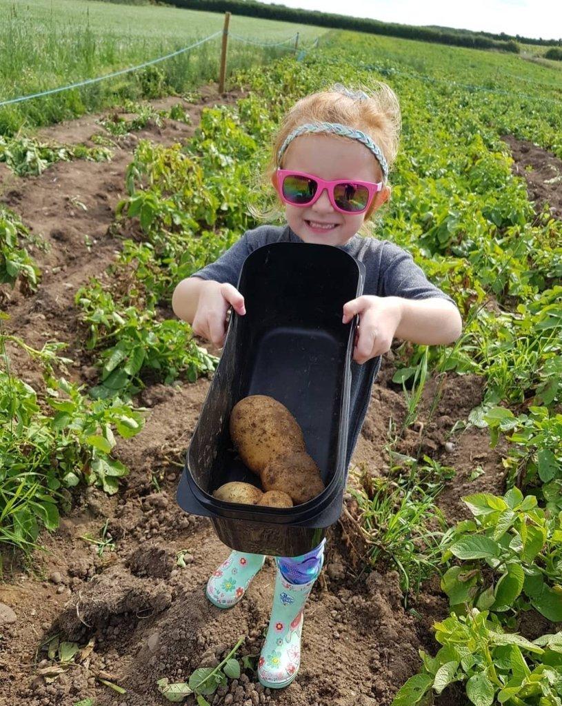 Proud of her potato picks!