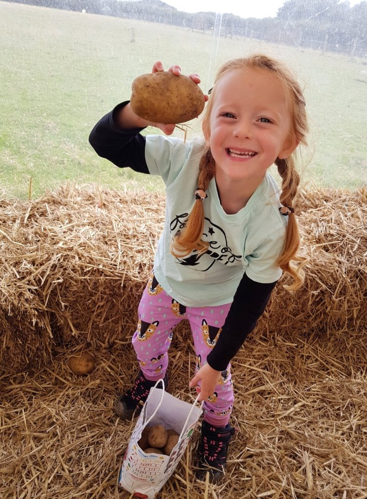 Filling her bag with potatoes at Manor Farm Park