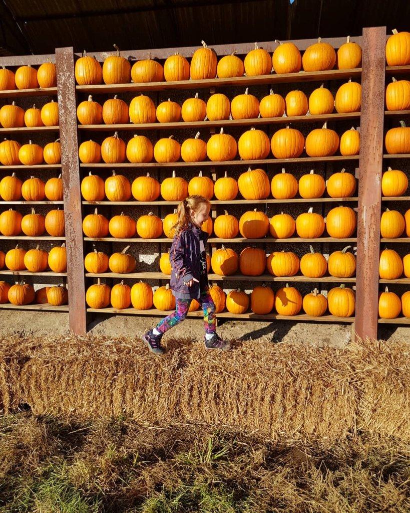 Enjoying the pumpkin wall at Cattows Farm