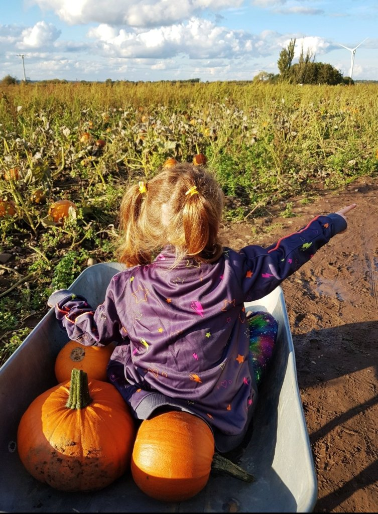 Cattows Farm - the best place for pumpkin picking in Leicestershire - fact!!