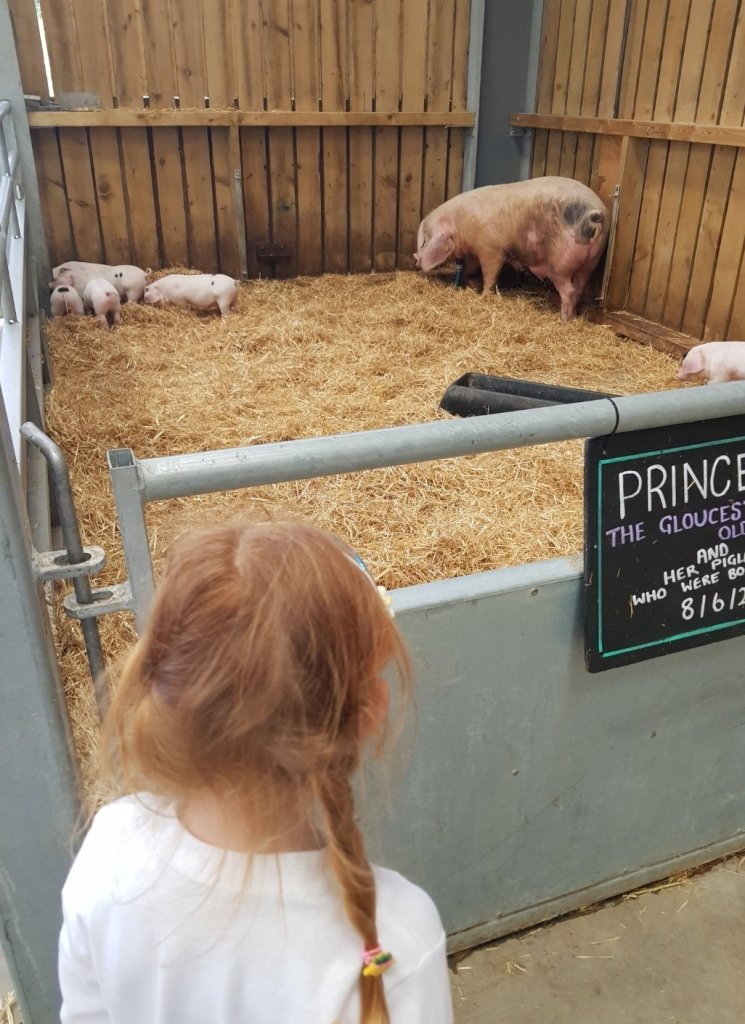 Meeting the piglets in the animal barn
