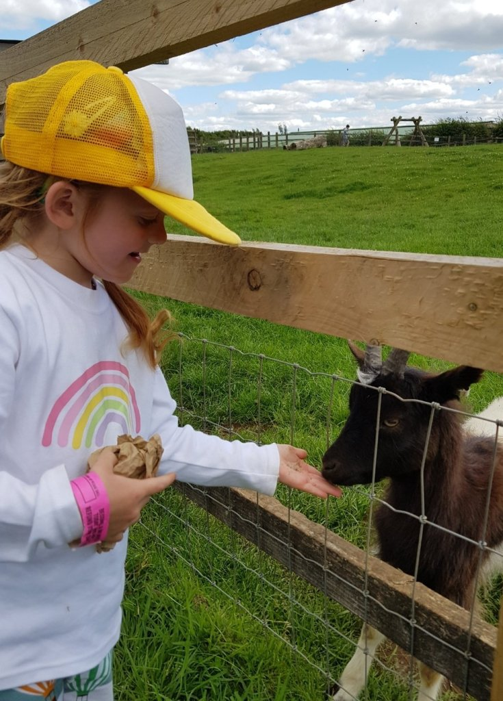 Feeding the goats outdoors at Cotswold Farm Park