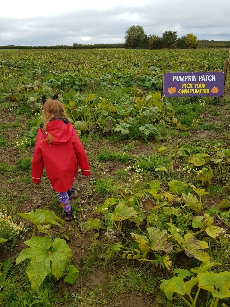 """Searching for """"the one"""" in the pumpkin patch"""