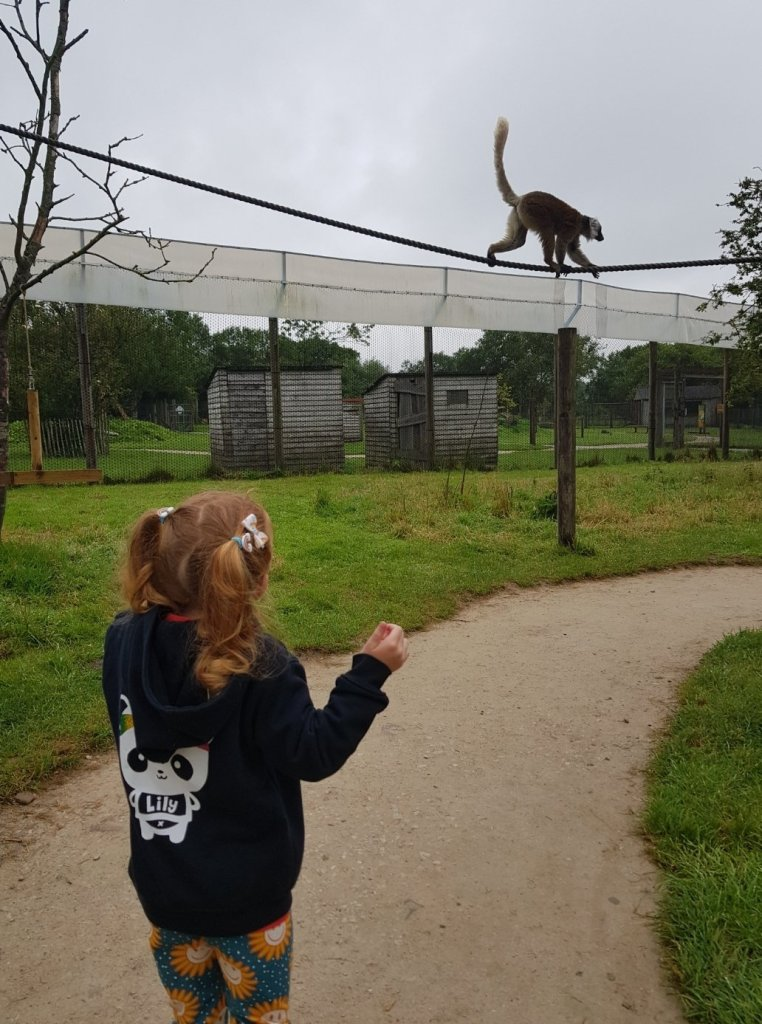 Lily loved the Lemur walk at Peak Wildlife Park
