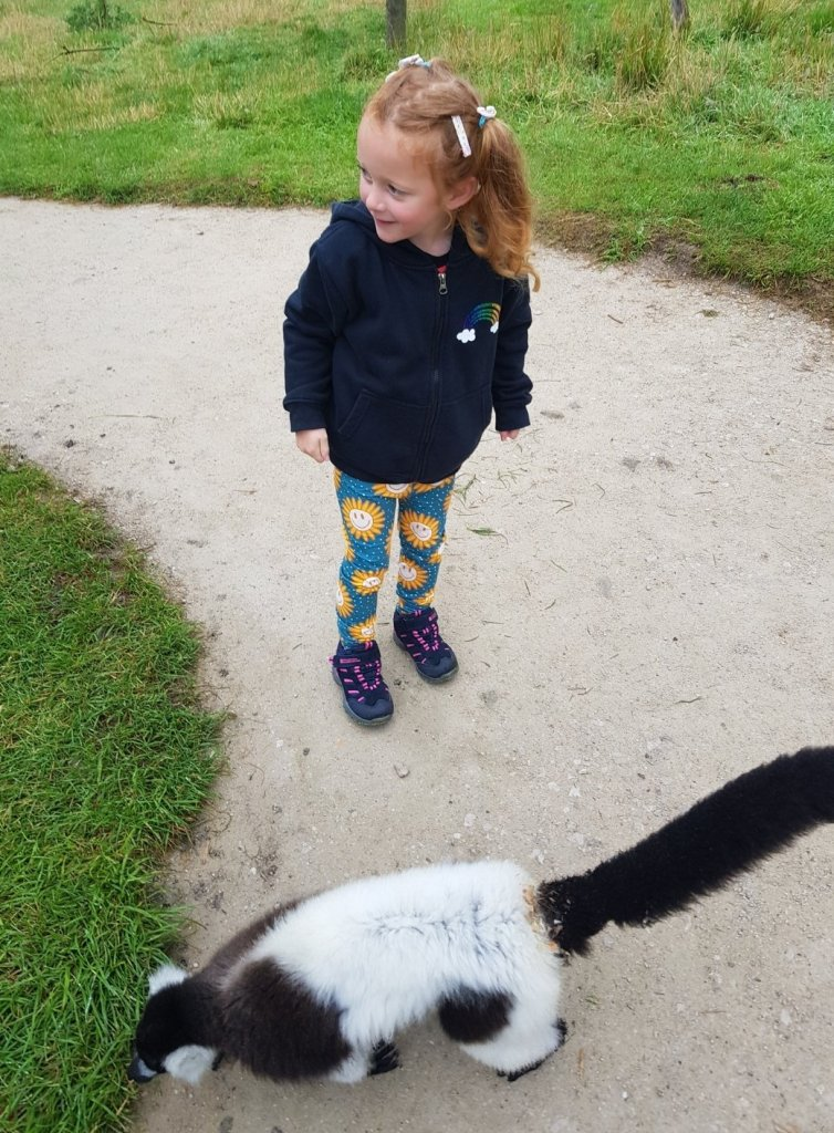 Walking with the lemurs