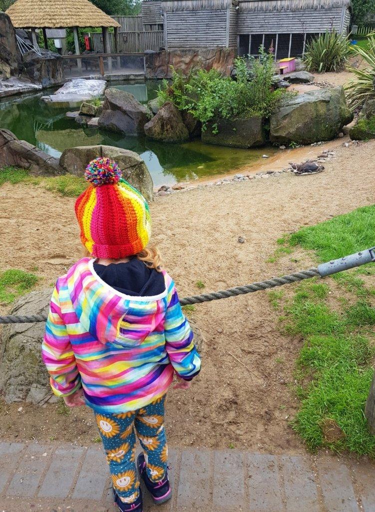 Watching the penguins at Peak Wildlife Park