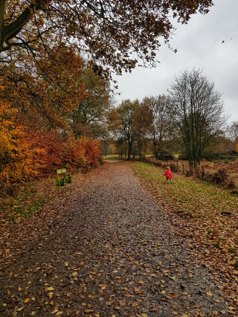 The trails around Beacon Hill are beautiful, with different distances and surfaces for everyone