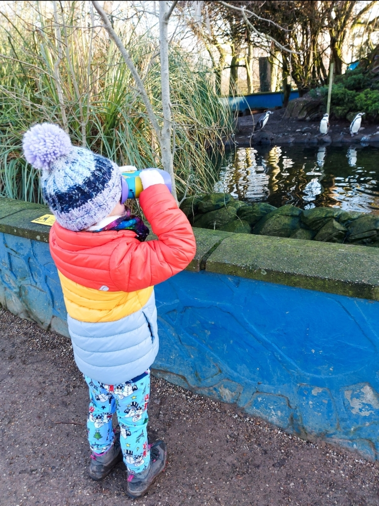 She can't wait to enjoy Big Garden Birdwatch this weekend - although these penguins are at Twycross Zoo, December 2020