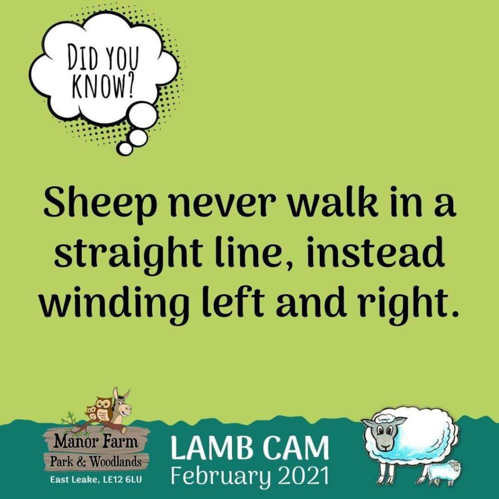 Join the Manor Farm Park Lamb Cam