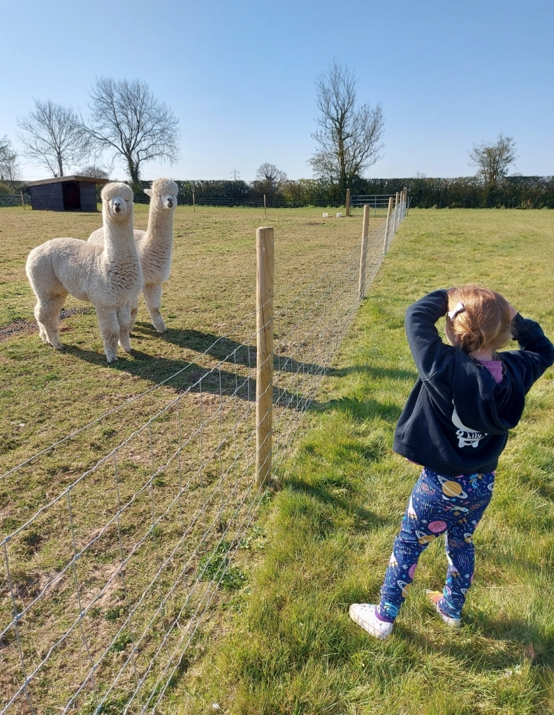 We had to say good morning and goodnight to the alpacas!