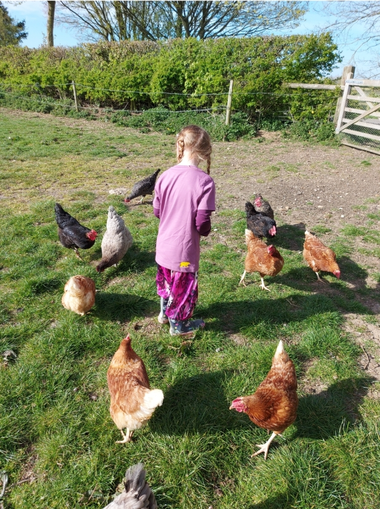 It was great learning about the chickens too - and feeding them their corn!