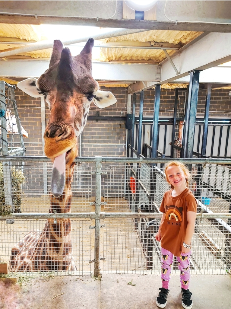 Up close with the giraffes at Chessington World of Adventures