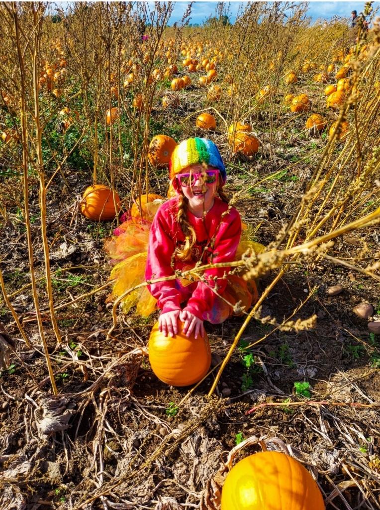 The pumpkin patch at Cattows Farm