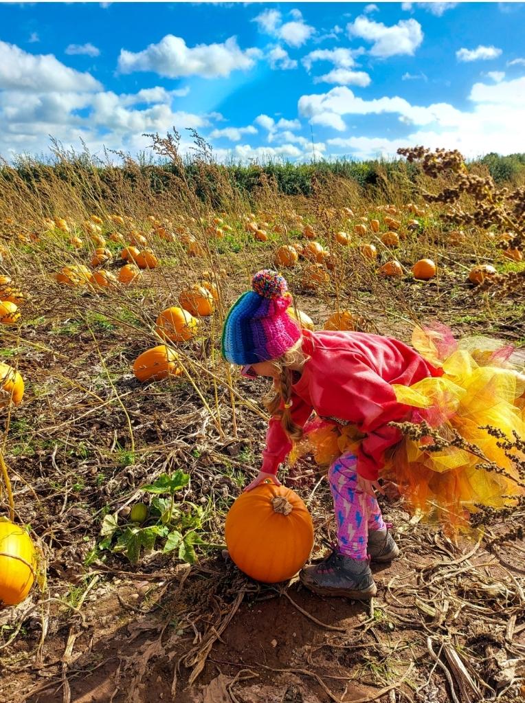 Selecting the perfect pumpkin!